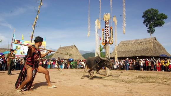 Độc đáo hội Đâm trâu ở Tây Giang ảnh 1