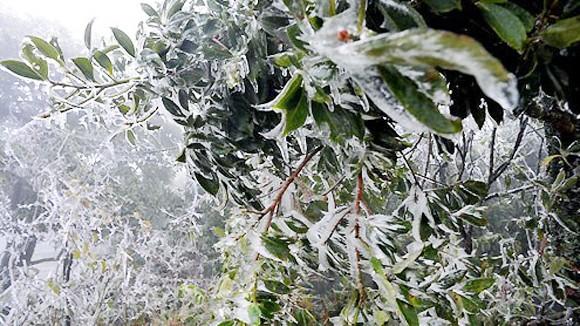Mẫu Sơn, Sa Pa lạnh dưới 6 độ C ảnh 1