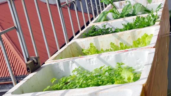Thuê kỹ sư trồng rau sạch tại gia ảnh 1