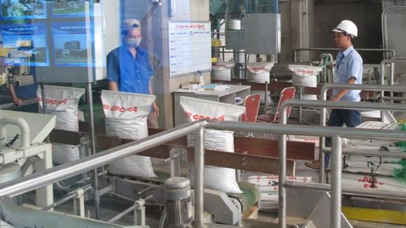 Xuất khẩu gạo không đủ tiền nhập khẩu ngô ảnh 1