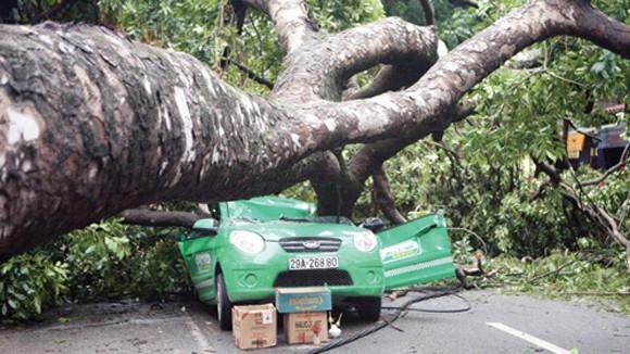 Dừng xe, tránh xa nơi có nhiều cây cối khi mưa quá to ảnh 1