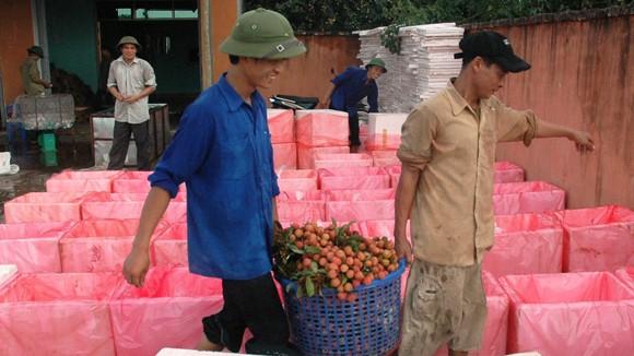 Việt Nam không nhập vải tươi Trung Quốc ảnh 1