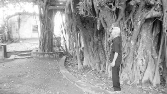 Huyền tích quanh gốc đa làng Tiền ảnh 2