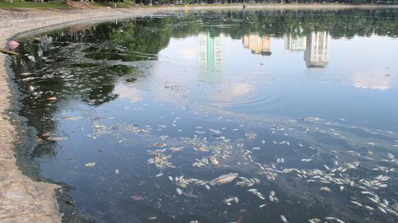 Thay đổi thời tiết, cá chết nổi trắng hồ Thiền Quang ảnh 1