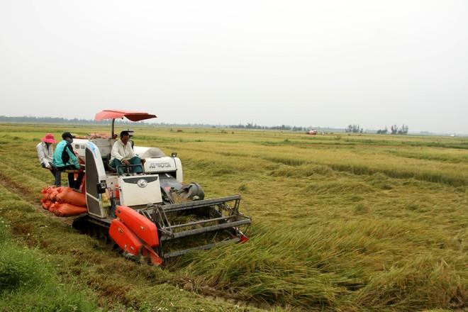 Nông nghiệp Việt Nam sẽ đứng trong số 15 nước phát triển nhất thế giới ảnh 1