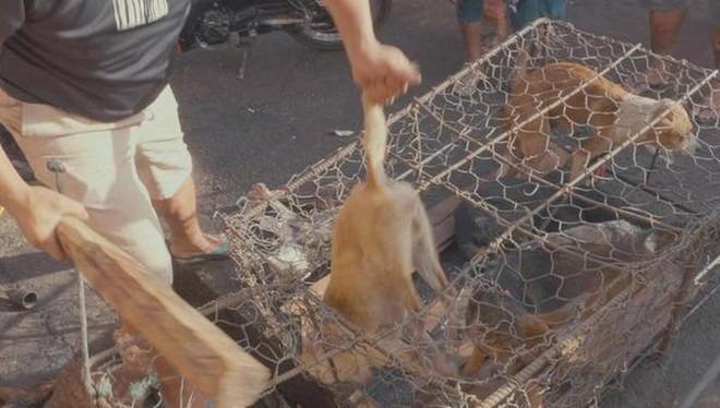 Quy định của pháp luật về xử lý hành vi đánh đập, hành hạ vật nuôi ảnh 1