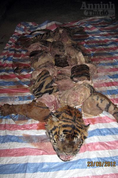 Cận cảnh vụ xẻ thịt hổ dã man trong bóng tối ảnh 5
