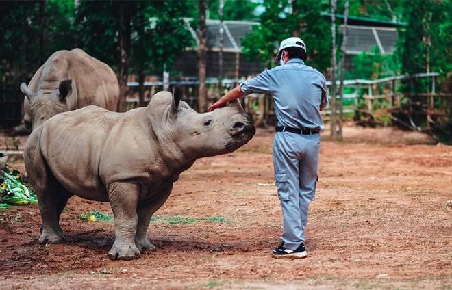 Kỷ lục 4 tê giác con chào đời trong vòng 16 tháng tại Vinpearl Safari ảnh 6