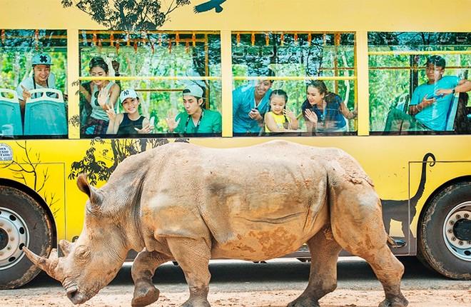 Kỷ lục 4 tê giác con chào đời trong vòng 16 tháng tại Vinpearl Safari ảnh 9