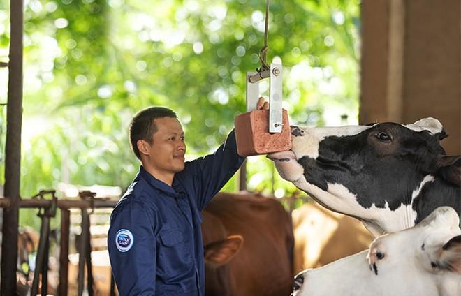 Cô Gái Hà Lan và hành trình kiến tạo giá trị cho ngành chăn nuôi bò sữa bền vững ảnh 2