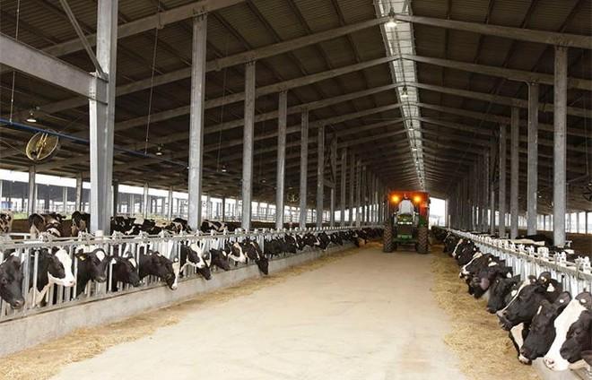 Vững đà tăng trưởng, TH true MILK đón đàn bò sữa cao sản nhập khẩu đầu tiên trong năm 2021 ảnh 6