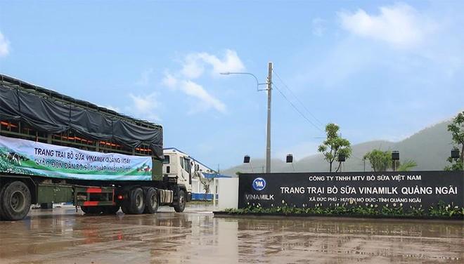 Vinamilk nhập khẩu hơn 2.100 bò sữa HF thuần chủng từ Mỹ về trang trại mới tại Quảng Ngãi ảnh 4