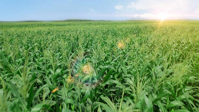 Vinamilk ra mắt hệ thống Trang trại sinh thái Vinamilk Green Farm ảnh 3
