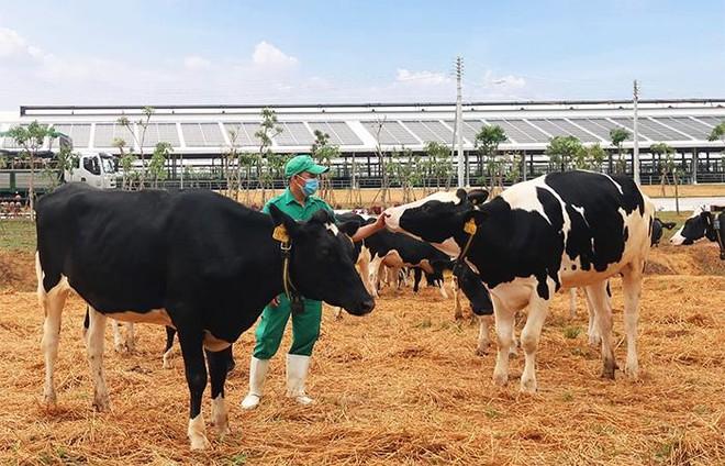 """""""Vượt sóng"""" Covid, Vinamilk thăng liền 6 hạng trên danh sách 50 công ty sữa lớn nhất thế giới ảnh 5"""