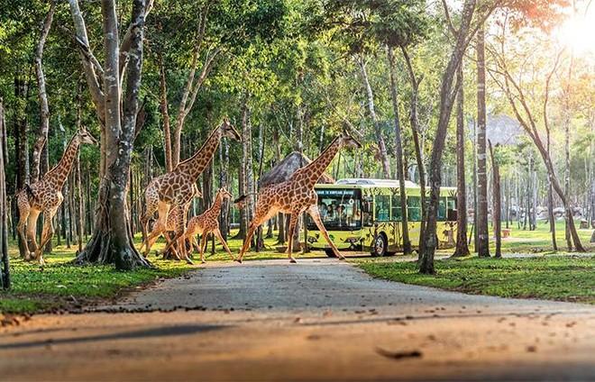 Vingroup khai trương siêu quần thể nghỉ dưỡng, vui chơi, giải trí hàng đầu Đông Nam Á – Phú Quốc United Center ảnh 12