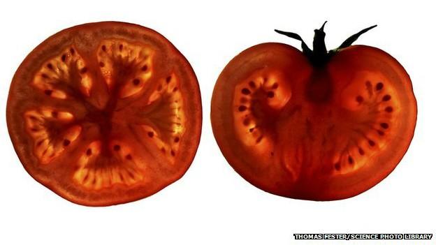 Thuốc viên cà chua ngăn ngừa bệnh tim mạch ảnh 1