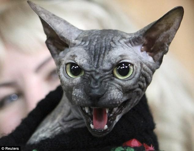 Chú mèo xấu xí nhất thế giới ảnh 1