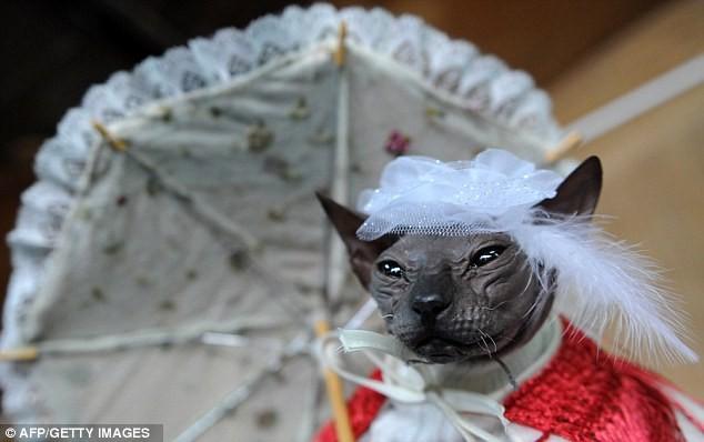 Chú mèo xấu xí nhất thế giới ảnh 2