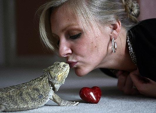 Hoãn cưới để dành tiền cứu …một con thằn lằn ảnh 1