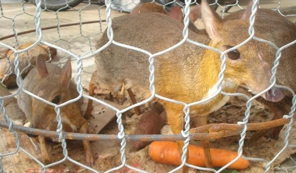 Quán nhậu chuyên bán động vật quý hiếm ảnh 1