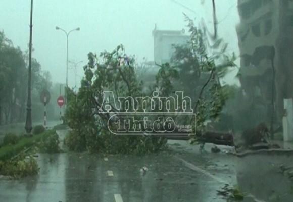 Quảng Bình: Tan hoang sau bão số 10 ảnh 1