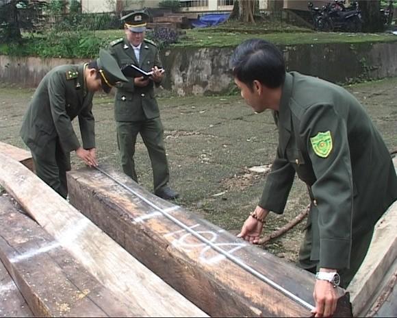 Kiểm tra xưởng cưa, phát hiện 12m3 gỗ lậu! ảnh 1