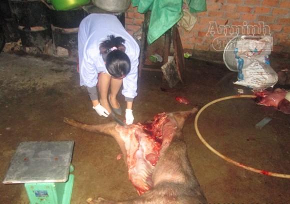 Kinh hãi điểm thu mua, xẻ thịt lợn bệnh chết ảnh 2