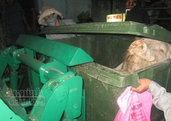 Kinh hãi điểm thu mua, xẻ thịt lợn bệnh chết ảnh 4