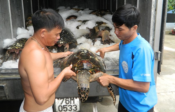 Săn trộm rùa biển, 14 ngư dân mất tích ảnh 1