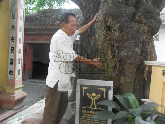 Những chuyện thực hư kỳ lạ về cây thị thần, gần 600 năm tuổi ảnh 2