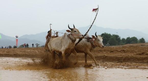 """Tái hiện lễ hội """"Đua bò Bảy Núi"""" ngay tại Hà Nội ảnh 5"""