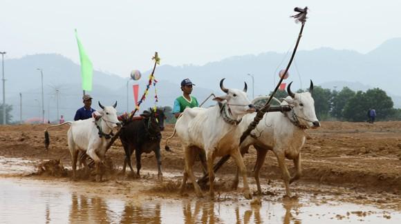 """Tái hiện lễ hội """"Đua bò Bảy Núi"""" ngay tại Hà Nội ảnh 7"""