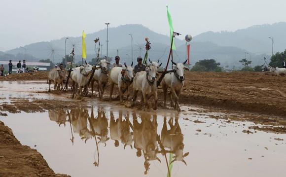 """Tái hiện lễ hội """"Đua bò Bảy Núi"""" ngay tại Hà Nội ảnh 8"""