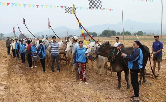 """Tái hiện lễ hội """"Đua bò Bảy Núi"""" ngay tại Hà Nội ảnh 4"""