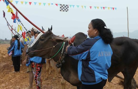 """Tái hiện lễ hội """"Đua bò Bảy Núi"""" ngay tại Hà Nội ảnh 3"""