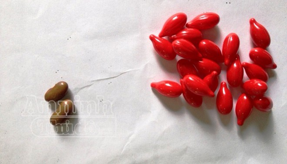 Hy hữu vụ cho trẻ uống nhầm vitamin A bằng... hạt đậu giống ảnh 1
