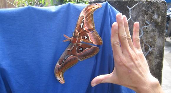 Chụp ảnh bướm lạ, bán được 5.000 đồng/tấm ảnh 1