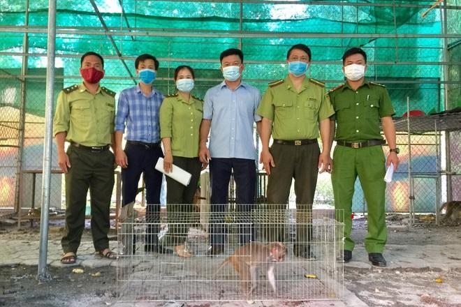 [Tin nhanh sáng 14-7-2021] Cứu hộ thả về rừng cá thể khỉ vàng nằm trong sách đỏ thế giới ảnh 2